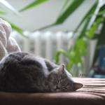 猫背が原因で眼精疲労になる?インナーマッスルを鍛えて解消する方法◎