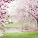 5月病と目の疲れの関係とは?春はいつも以上に生活リズムを整えよう
